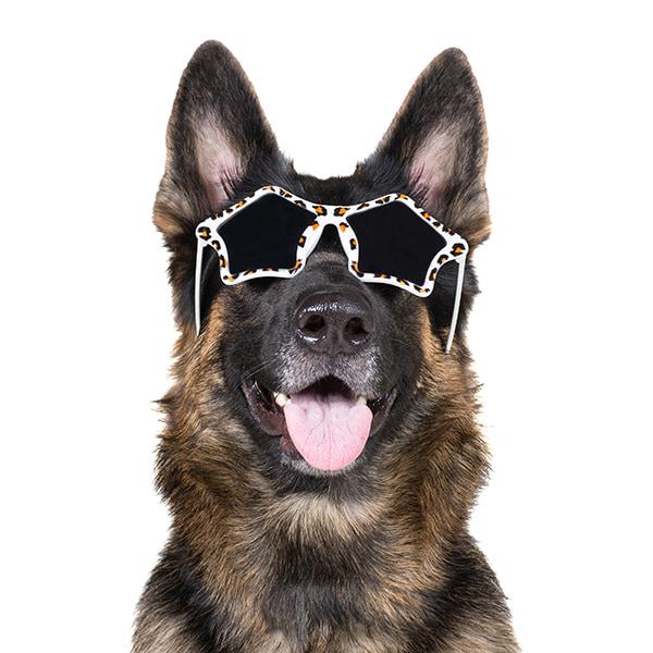 rockstar dog